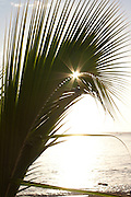Sun bursting through a palm leaf