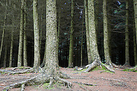 Trees in forest low section