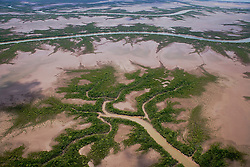 Branching fingers of the rivers form delicate patters as the mangroves fan out onto mud flats near Cambridge Gulf in the east Kimberley.