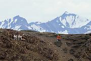 Dall Sheep, Sheep, lamb, lambs, flock, boy and girl, boy, girl, children, Denali National Park, Alaska