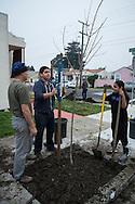 Richmond Trees Tree Planting Event, Richmond, California