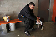 November 10, 2013 - Brooklyn, NY. A volunteer tends to a dog with an eye infection at the Sean Casey Animal Rescue shelter in Sunset Park. 11/10/2013 Photograph by Nathan Place/NYCity Photo Wire