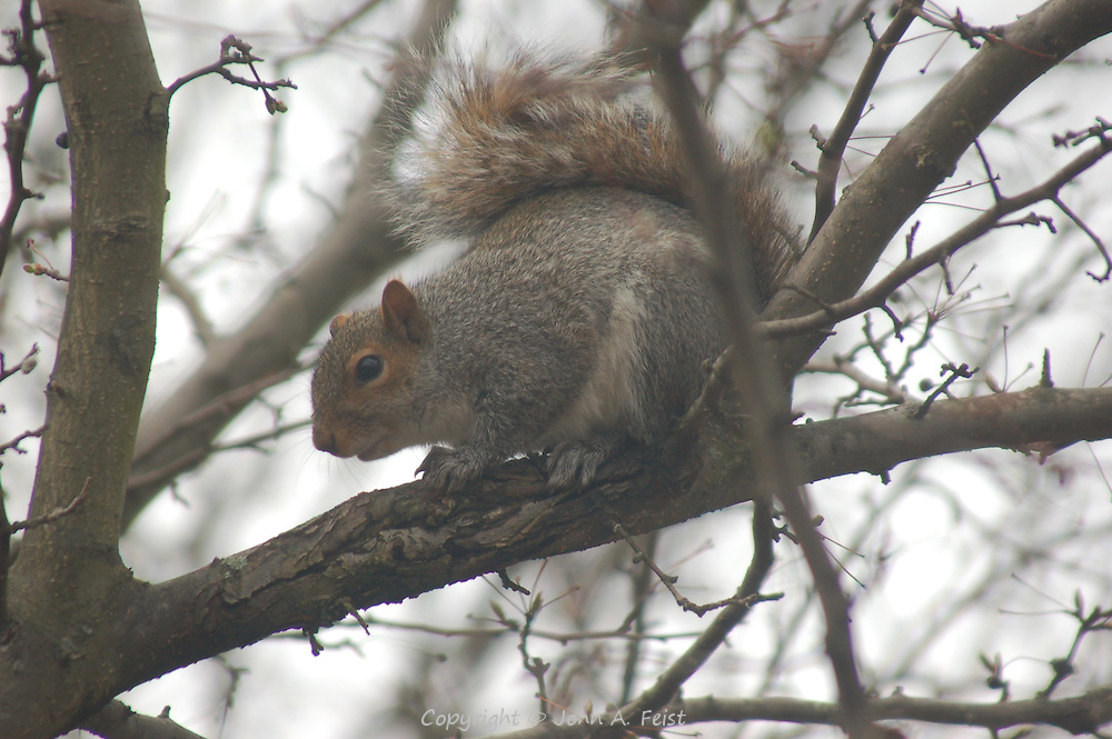 This squirrel is clearly looking for something in the tree outside my window.  Hillsborough, NJ