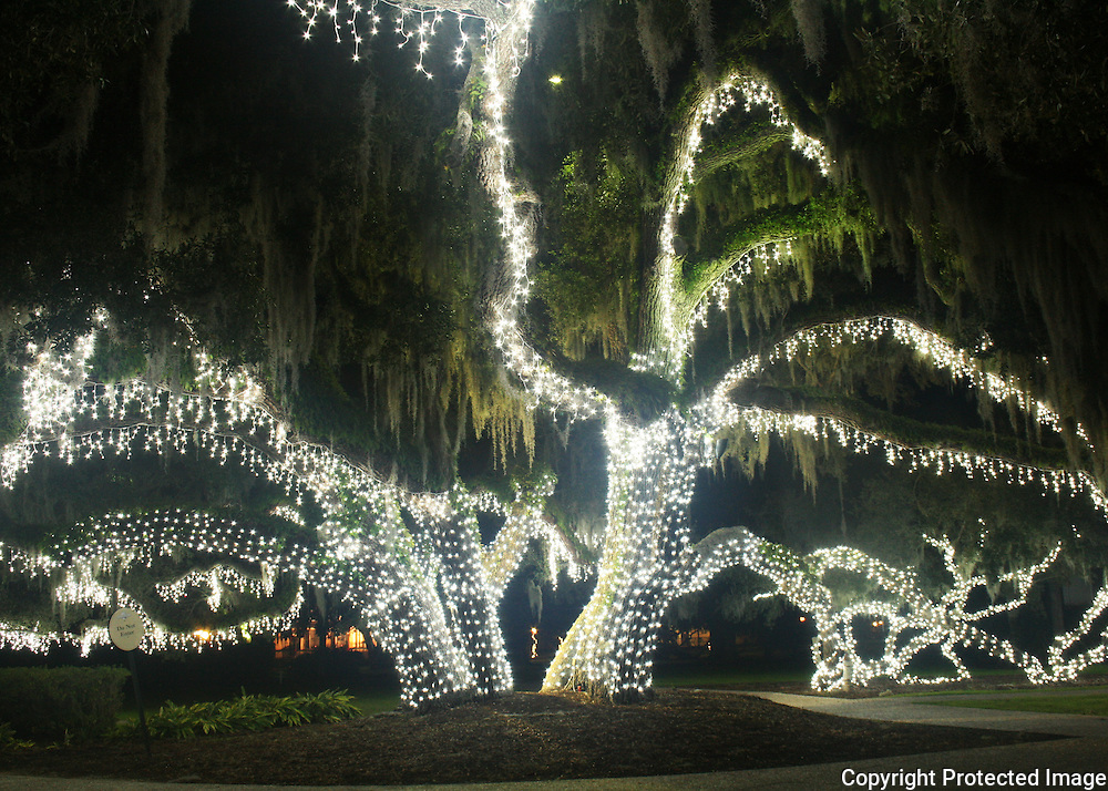 A giant oak tree, decorated for Christmas on Jekyll Island in the Historic District.