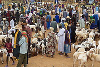 Niger. Marche du dimanche d'Ayorou sur les rives du fleuve Niger. Marche au animaux. // Niger. Sunday market at Ayorou on the Niger river bank. Cattle market.