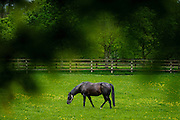 Tully, The Irish National Stud is the heart of Ireland's thoroughbred industry.