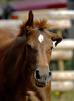 """warm blood filly """"Dolce"""" shaking at flies"""