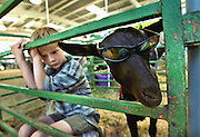Benjamin Neufeld 8, from Somerset stays cool inside with his goat Tulie at the El Dorado County Fair. He was there along with many others showing off their animals. Tulie liked having the shades on. PIcture taken 6/15/00. Sacramento Bee/Bryan Patrick.