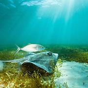 Environnement marin -- Marine environment