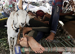 August 27, 2017 - Delhi, New Delhi, India - Thousand of goats are on sale in Delhi's traditional Eid market at Jama Masjid. (Credit Image: © Shrikant Singh/Pacific Press via ZUMA Wire)