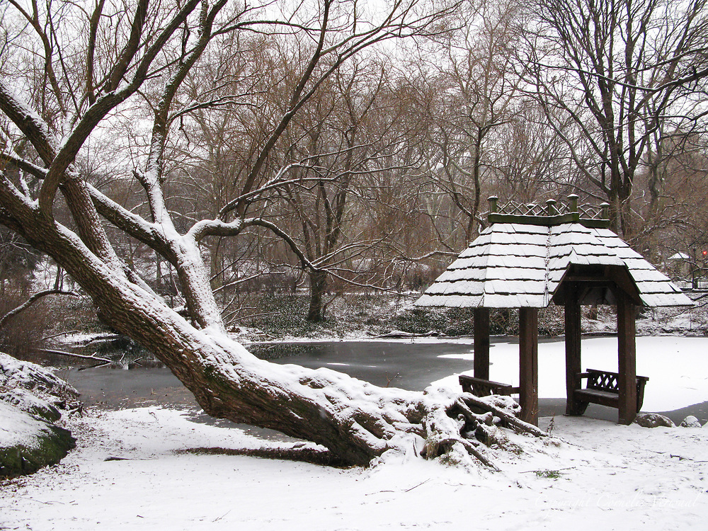 Image Result For New York Central Park Winter