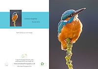 Common Kingfisher Alcedo atthis A5 Greeting Card with Peel and Seal White Envelope