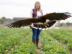 © Licensed to London News Pictures. 18/05/20. Hillam, UK. <br />