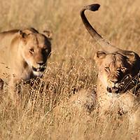 Kenya 2017<br /> Photo by Shmuel Thaler<br /> www.shmuelthaler.com<br /> shmuel_thaler@yahoo.com<br /> +1-831-706-7513