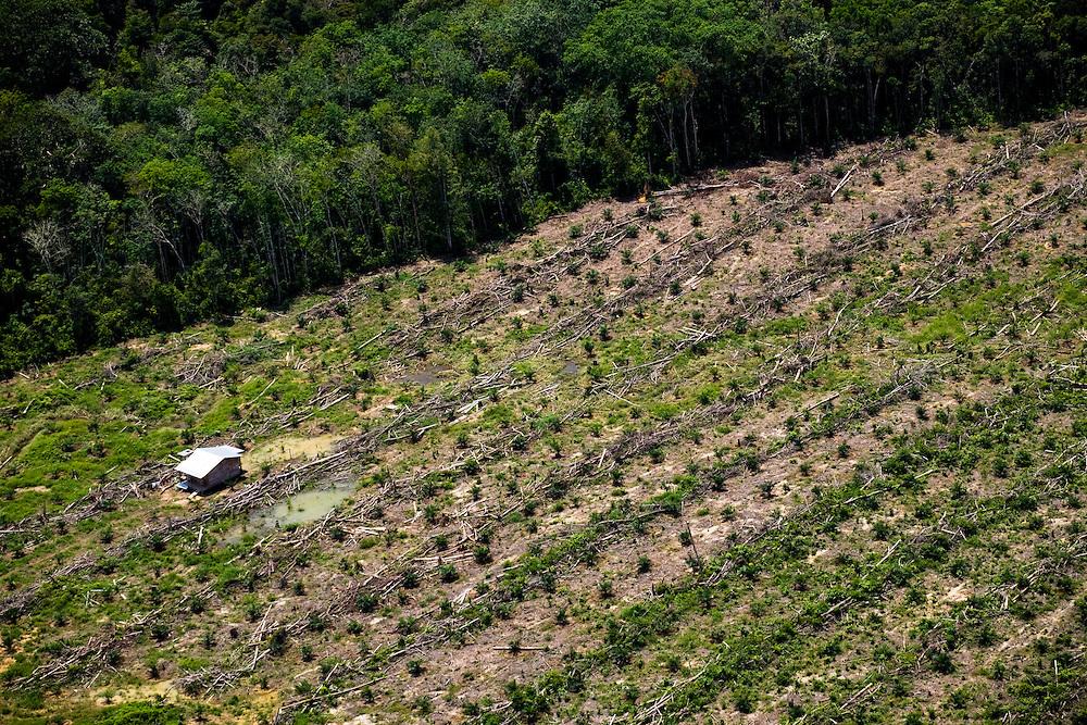 Vast expanses of palm oil plantations have replaced the rainforest around Pekanbaru capital of Riau province, Sumatra, Indonesia, Aug. 30, 2008..Daniel Beltra/Greenpeace