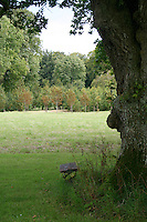 Wooden bench under an oak tree in a park in Ireland