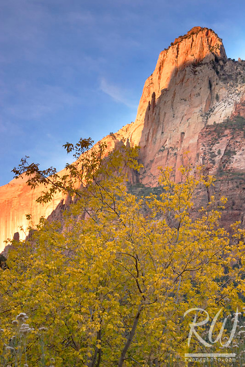 Fall Foliage and First Light on Court of the Patriarchs, Zion National Park, Utah