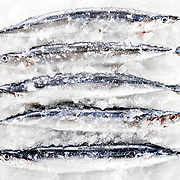 Fish stacked on bed of Ice, San Diego food photographer