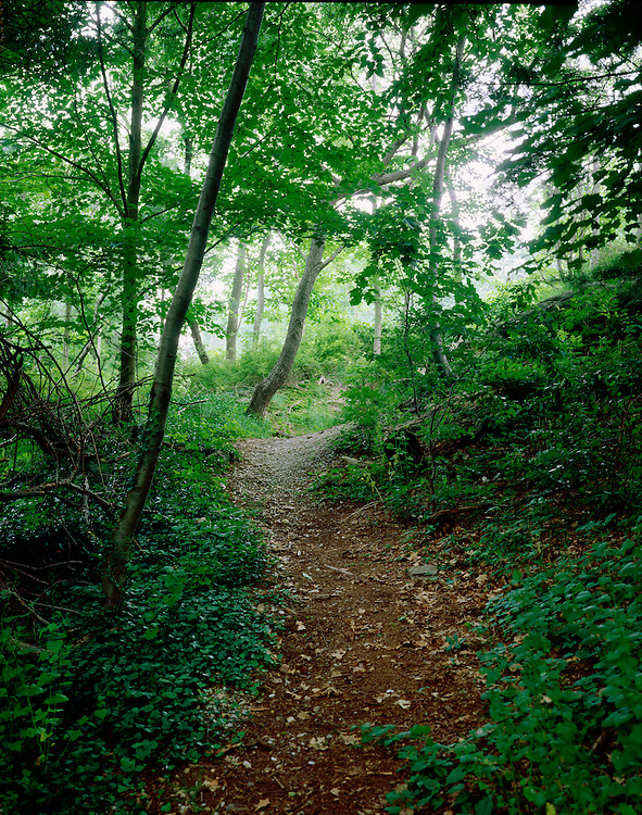 a walking path winds through a lush forest setting