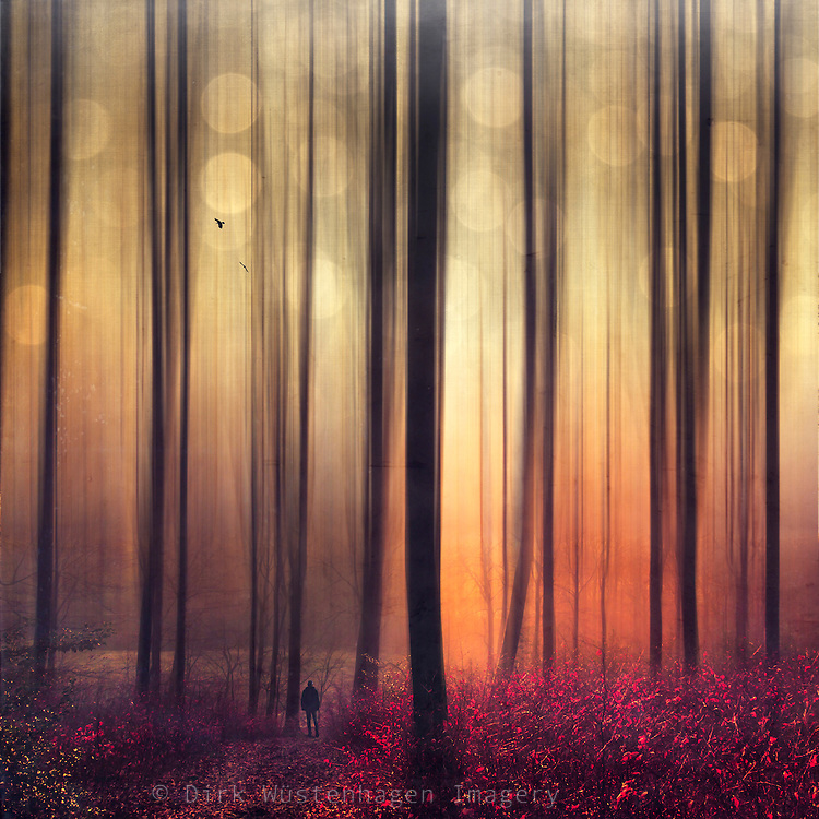 Abstraction of a autumn forest at sunrise with a man walking towards the light