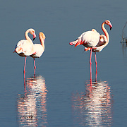 Birds of Evros Delta in Greece