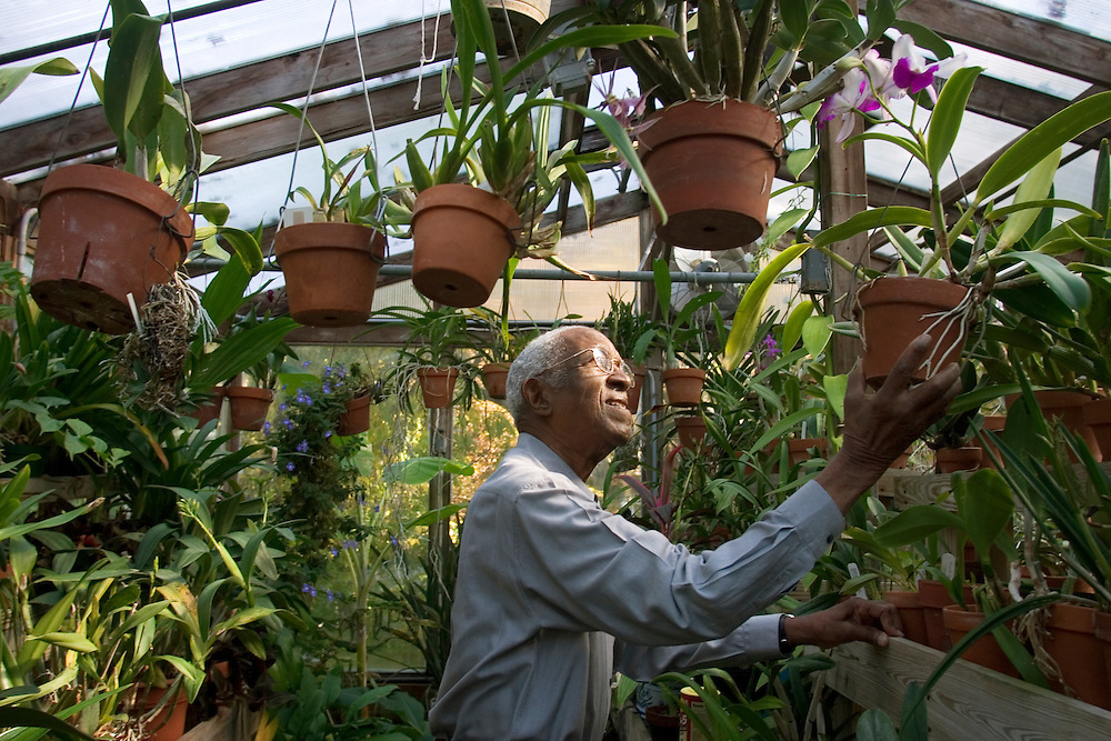 Duke University History Professor Emeritus John Hope Franklin tends to an orchid inside his Durham greenhouse filled with a wide variety of exotic orchids, including two strands named after him. Franklin recently won the 2006 John W. Kluge award for his lifetime achievements in the humanities and is author of the seminal book From Slavery to Freedom: A History of African-Americans, now in its seventh edition. Photo by DL Anderson.