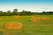 bales at sunset<br /> near Bourget<br /> Ontario<br /> Canada