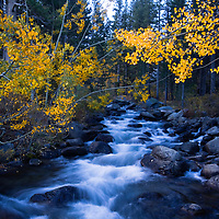 Fall colors in the Sierra Nevada Mountains is a special time. This image was taken in the Bishop Creek Canyon. It is just a sample of the beauty that you will encounter during this time of the year in the Eastern Sierra's.