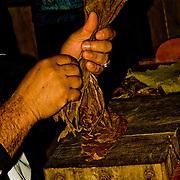 Making Cuban cigars in Pinar del Rio, Cuba.