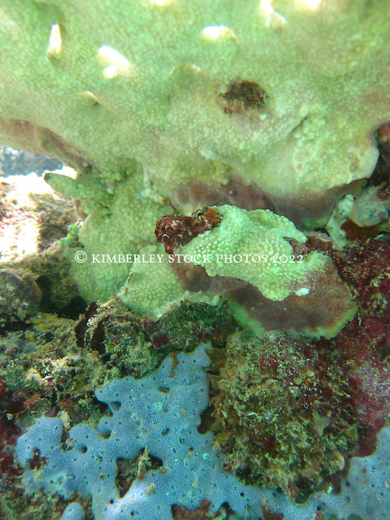 Colourful corals and sponges at Lombadina on the Dampier Peninsula
