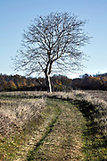 tree silhouetted in rural landscape