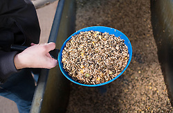 © Licensed to London News Pictures. 22/03/2014<br /> <br /> Middleham, North Yorkshire<br /> <br /> Race horse food is given to the horses at the Mark Johnston stables in Middleham, North Yorkshire. Race horses have been trained in Middleham for over 200 years using the extensive gallops on the high moor. There are currently 15 stables based around the small Yorkshire village.<br /> <br /> Photo credit : Ian Forsyth/LNP