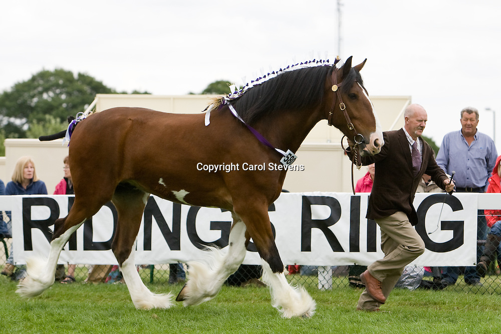 Messrs B &amp; D Lowrie  Bay Gelding  f  2006  Upperfoot Sir Selwyn<br />