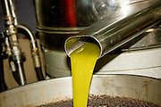 Olive Oil extracted from olives in a press Photographed in Israel