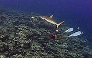 Yap Manta Fest Vertigo Reef