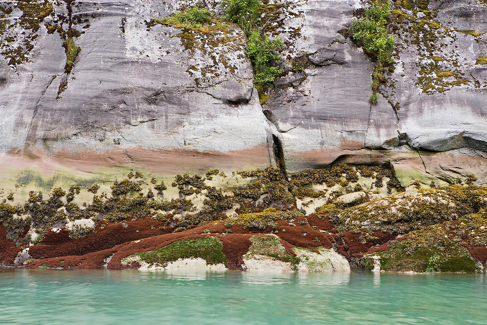 Low tide reveals colorful marine life along Endicott Arm in the Inside Passage of Alaska. Southeast. Afternoon.