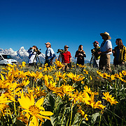 A Teton Teton Science Schools wildlife tour stops to explore the balsamroot flowers along the Antelope Flats Road in Grand Teton National Park, Wyoming.(Matthew Bart, Maura Bushior, Katie-Cloe Stock, Lead Guide Dawson)