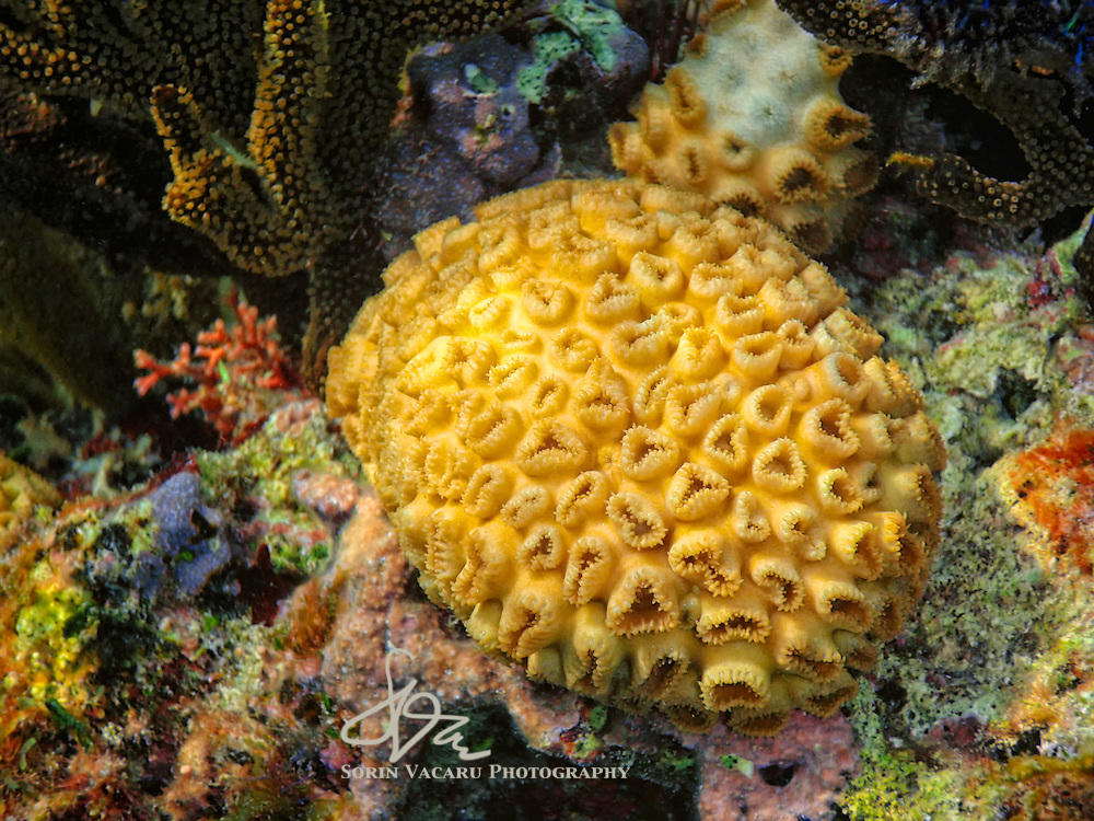 A glimpse of the almost infinite variety of life on a coral reef