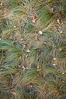 View of swirled texture grasses and leaves in maple Canyon, Utah, USA.