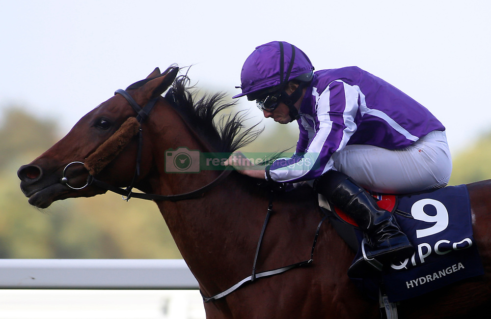 Hydrangea ridden by Ryan Moore wins The QIPCO British Chahamions Fillies & Mares Stakes Race run during Qipco British Champions Day at Ascot Racecourse.