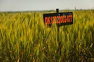 2017 Wheat Variety Trials