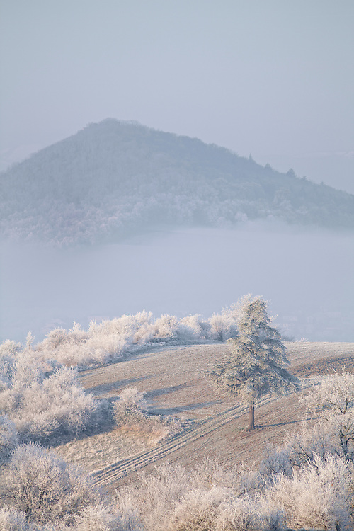 Morning frost scenery with trees and mist.