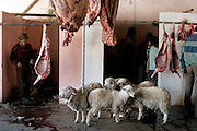 Standing beneath hanging sheep carcasses, five sheep wait patiently; soon it will be their turn at the slaughterhouse, which is attached to the Zumbagua market in Ecuador. At the live-animal market a quarter mile away, shoppers can pick out the animals they want, then have them killed, skinned, and cleaned. The entire process, including the time it takes to walk the sheep from the market to the slaughterhouse, takes less than an hour. Hungry Planet: What the World Eats (p. 113).