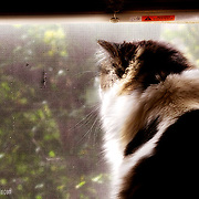 Minolta the cat looking out the window