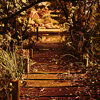 A small timber jetty leading to a river through undergrowth in Suffolk England