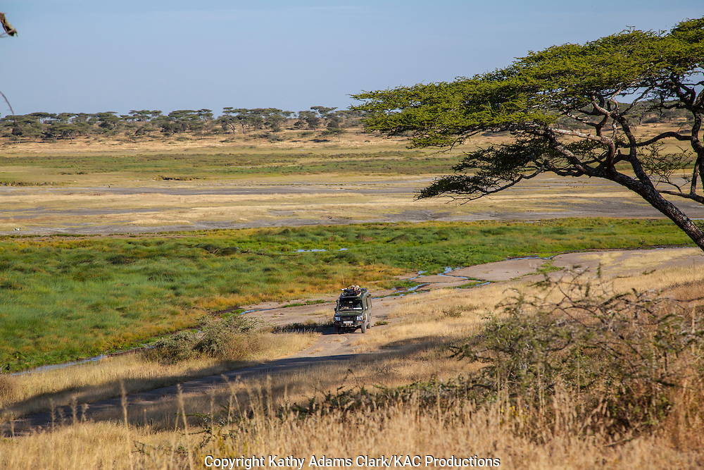 Unique Safari vehicle around a marshy area, Ndutu, Ngorongoro Conservation Area, Tanzania, Africa.
