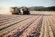 Farm machinery harvesting onions in western Idaho.
