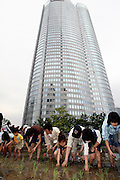Tokyo residents join in a rice-planting event on the roof top of a seven story building in the Roppongi Hills urban development district of downtown Tokyo. The roof top rice field, which was inaugurated in 2003 and was inspired by a German biotop project at the Bonn Art Exhibition Hall in Bonn Germany. It is part of efforts by organizers Mori Corp. to re-acquaint urban dwellers with traditional culture.