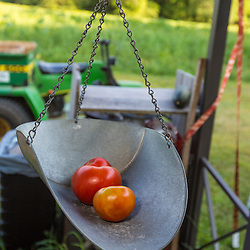 Tomatoes in a scale at a farm stand in Epping, New Hampshire.