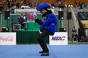 during the 2013 MEAC Cheerleader Championship at Echols Hall in Norfolk, Virginia.  March 10, 2013  (Photo by Mark W. Sutton)